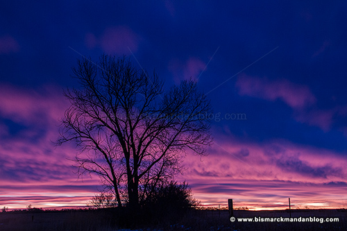 sunrise_tree_32667