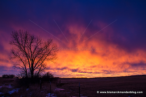 sunrise_tree_32890