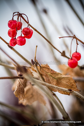 berries_32257