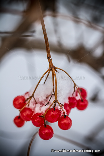 berries_32261