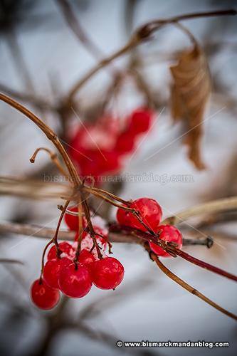 berries_32264
