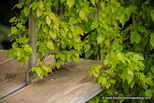 sitting_tree_34214