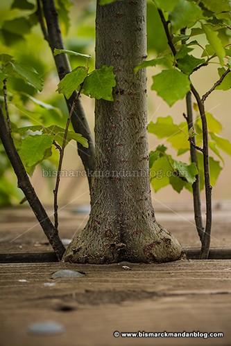 sitting_tree_34241