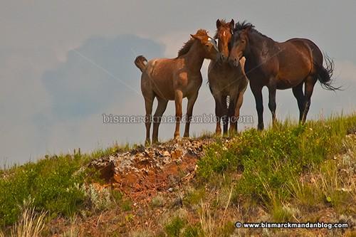 badlands_horses_22742