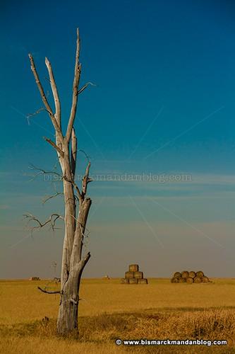 hay_tree_23072