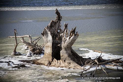 stump_castle_36691