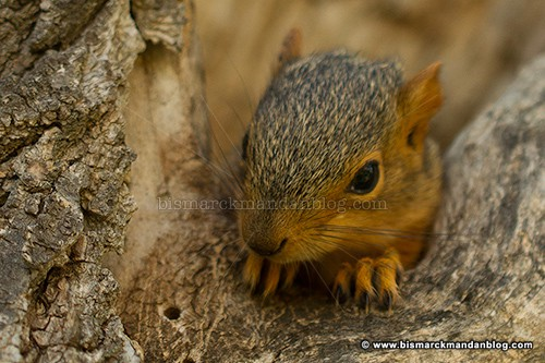 baby_squirrel_37570