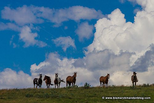 horses_37832