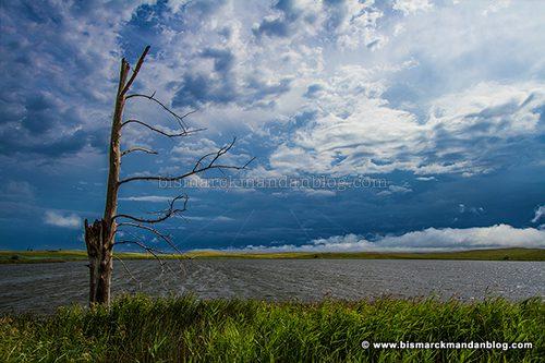 stormy_tree_42193