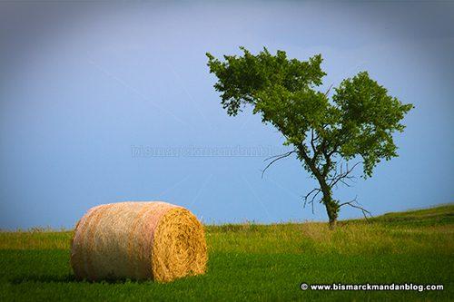 tree_n_bale_40335